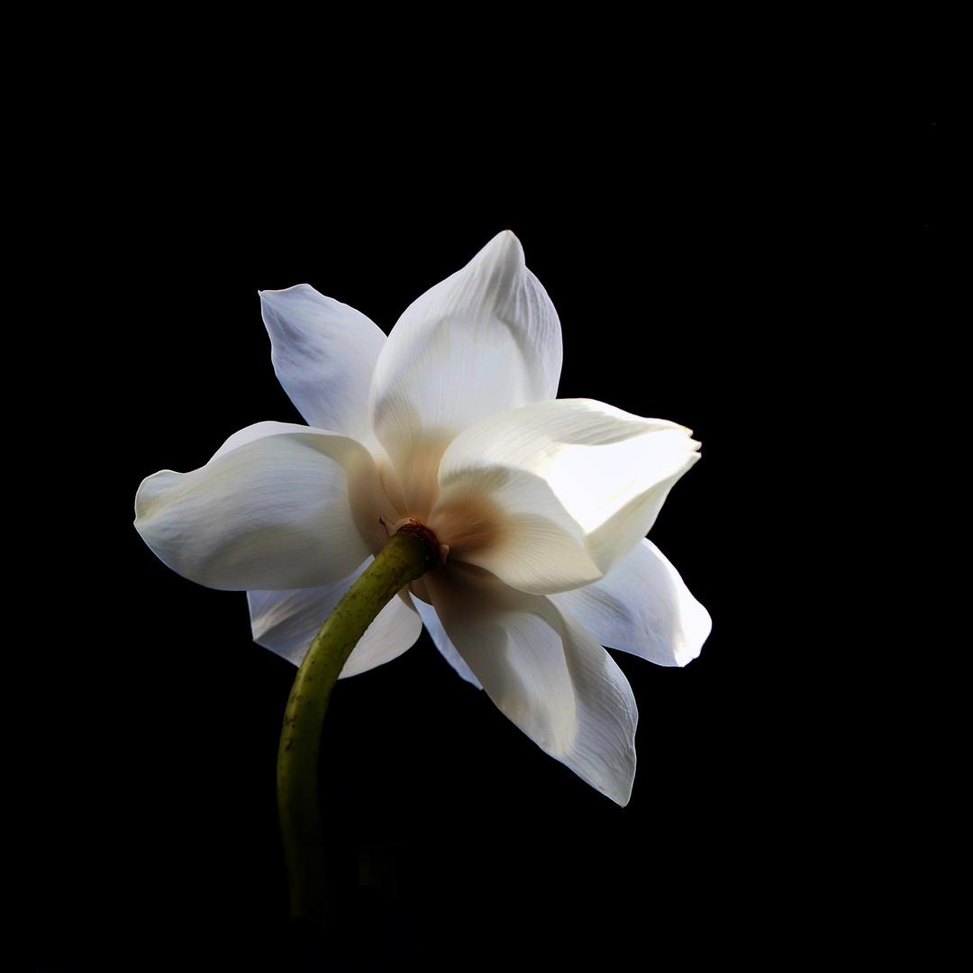W Lotus 07