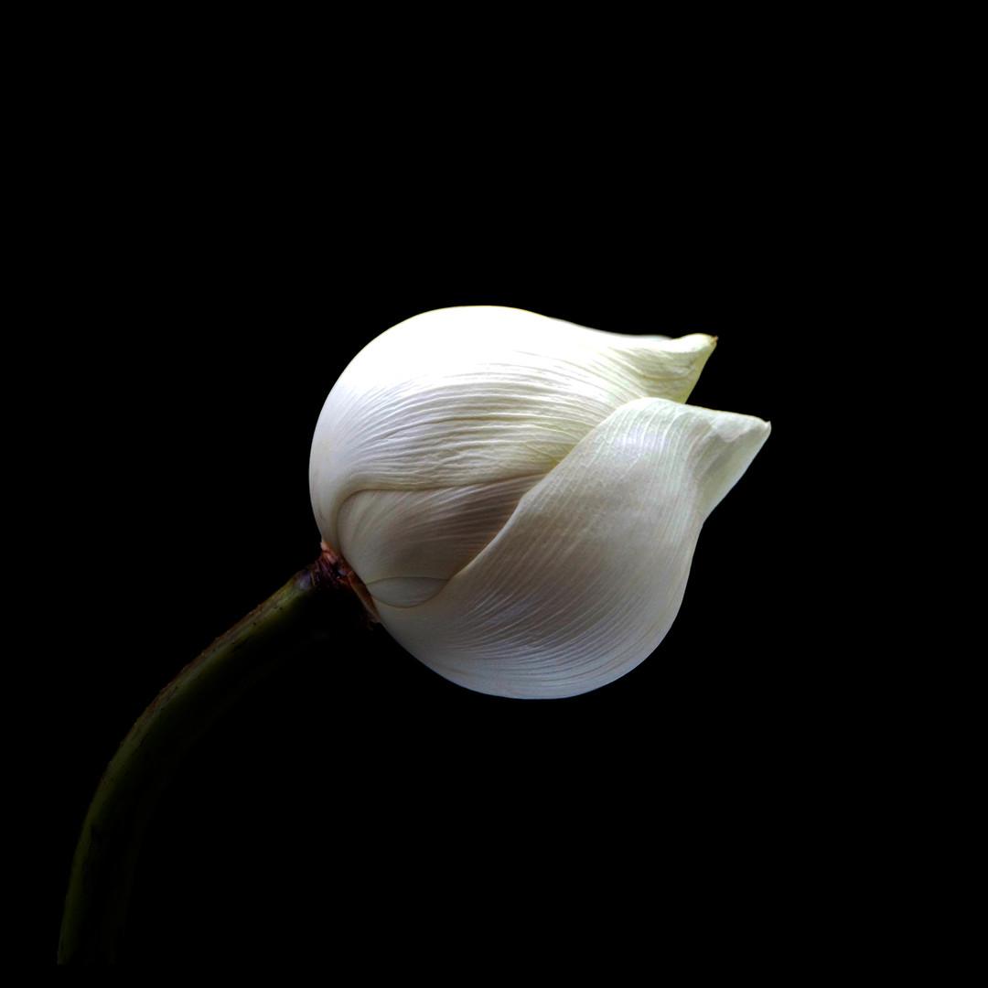 W Lotus 01