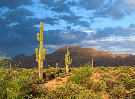 I'm Honored By The Recognition For Helping Establish Our McDowell Sonoran  Preserve