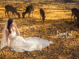 奈良紅葉 Nara Autumn