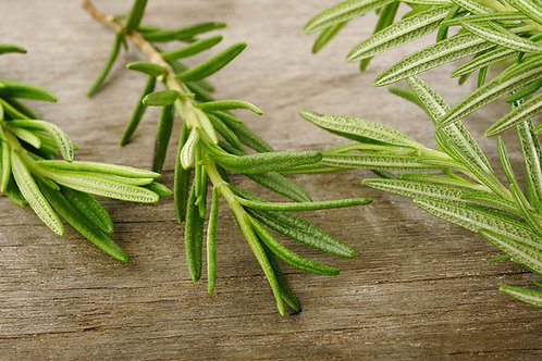 Rosemary (Rosmarinus officinalis ct camphor) Essential Oil (5ml)