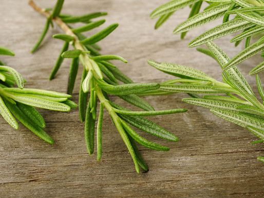Rosemary  - Not Just a Culinary Herb