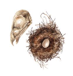 Craneo y nido