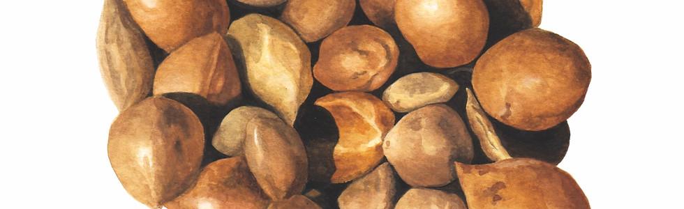 Fruto del Chañar