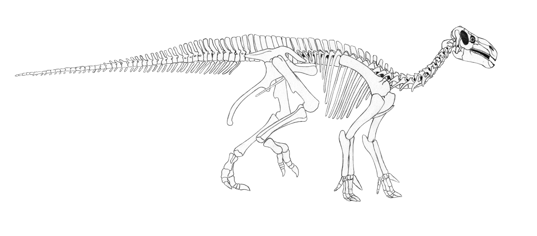 Esqueleto iguanodon