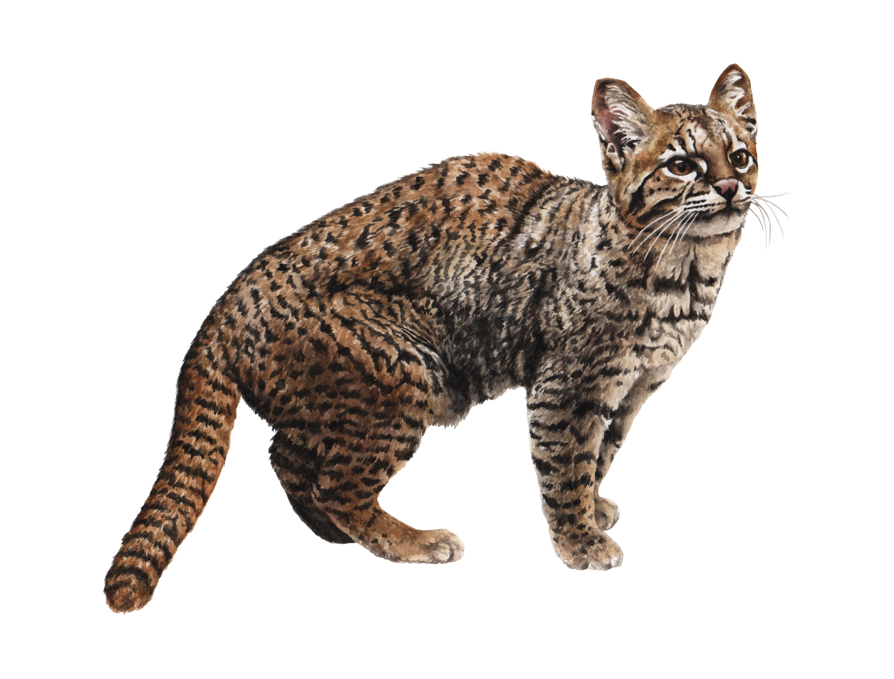 Gato guiña