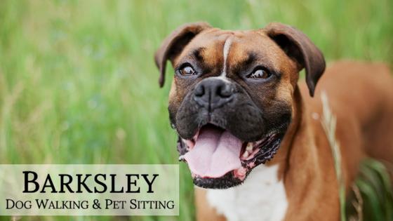 Barksley Dog Walking Amp Pet Sitting Richmond