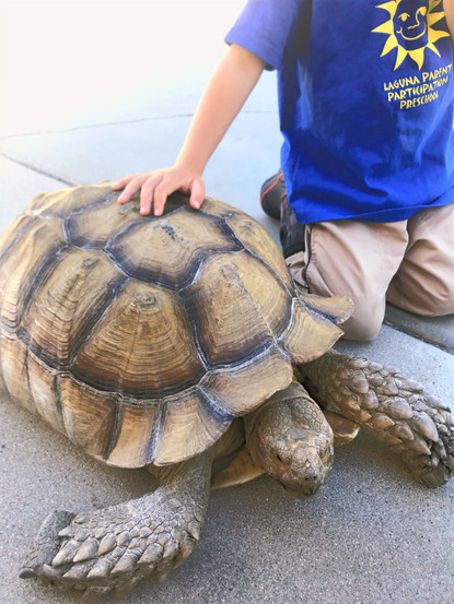 School tortoise