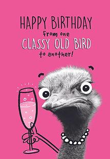 2_Classy Old Bird.jpg