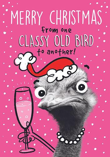XPP001 Classy Old Bird.jpg