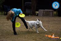 Disc Dog, il floater, il rovescio e l'Around The World