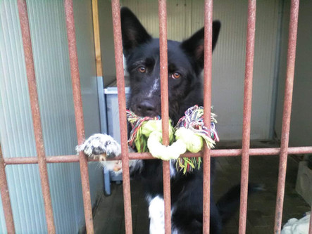 Una seconda opportunità per i cani in canile