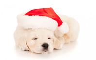 NON regalate un cucciolo a Natale