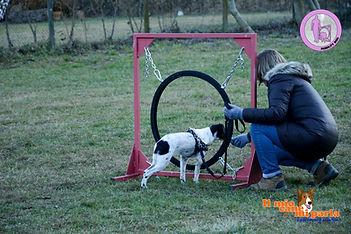 Mobilty Dog Lugano