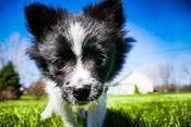 L'importanza della socializzazione nel cucciolo