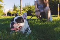 Scegliere il Dog Sitter: quale tra i tanti?