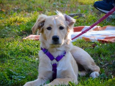 5 consigli per scegliere il nostro cane