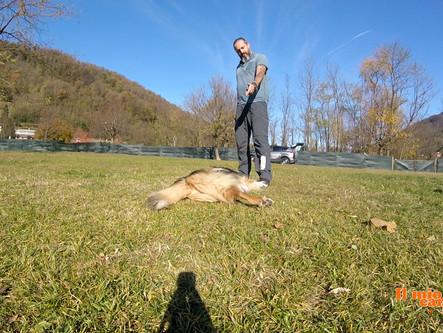 """Come insegnare a fare il """"morto"""" al proprio cane"""