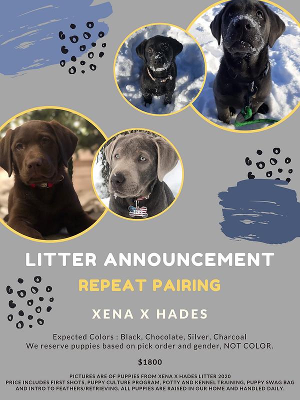 Litter Announcement (1).png