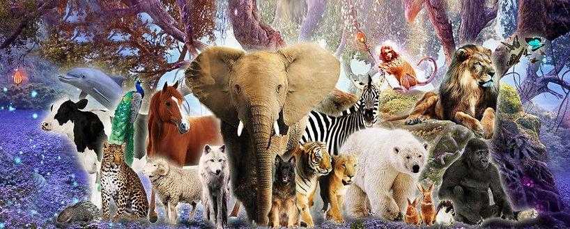 Animal guide 2 a.jpg