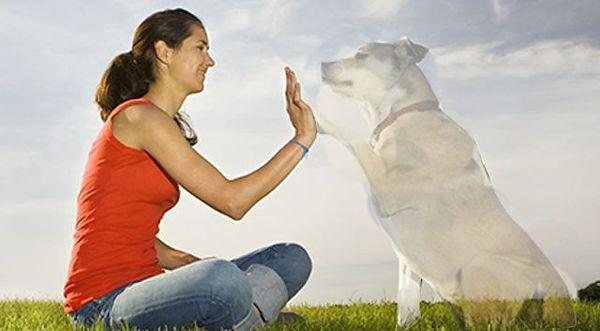 dog spirit 2 a.jpg