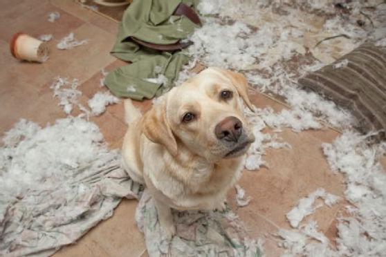 bad dog 1 a.jpg