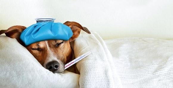 sick pet 1 a.jpg