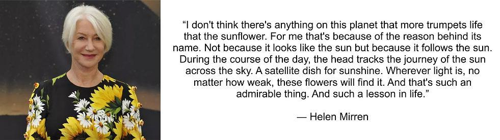 Sunflower Helen Mirren quote.jpg