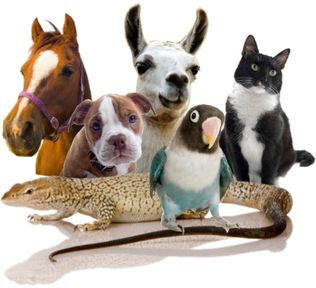 animal com 4 a.jpg