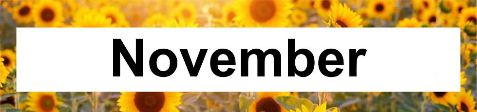 11 Nov.jpg