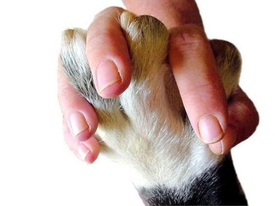 holding paw 3 a.jpg