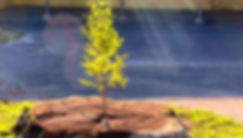 tree%25201%2520a_edited_edited.jpg