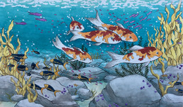 Lucy Devereux - Young Koi