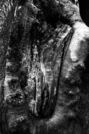 Emily Silvester - Beauty and Blight