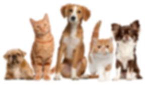 pets-topics-image.jpg