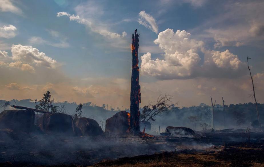 Timestream: Ecocide in Brazil