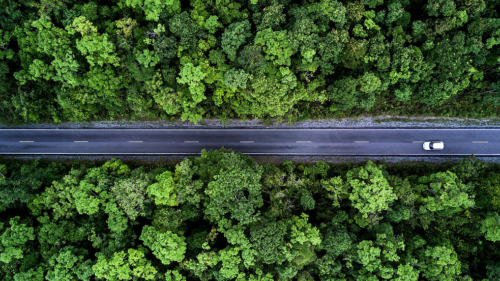 Road through the green forest, aerial vi