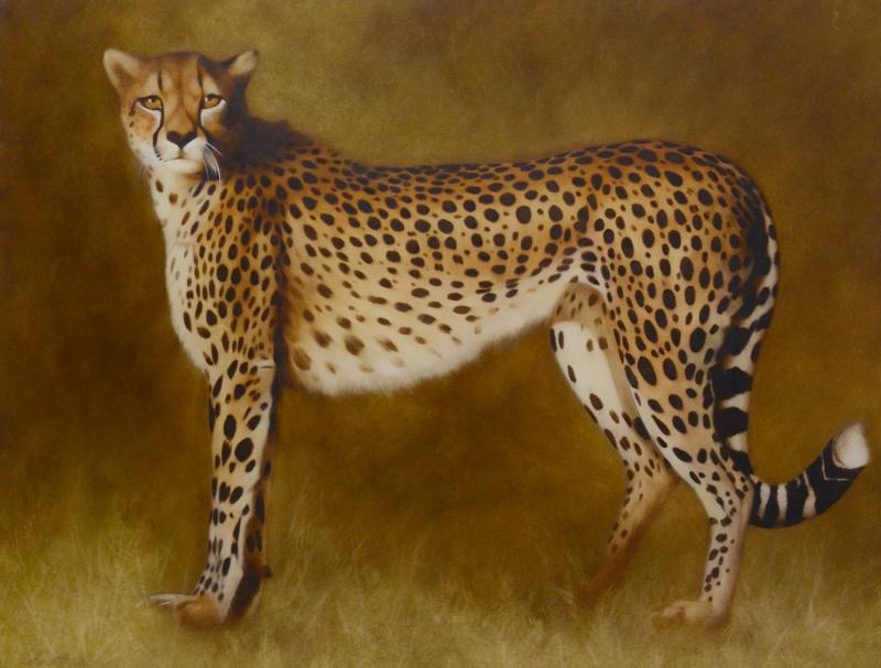 cheetah 2013