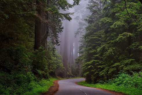 trees-1587301_1920.jpg