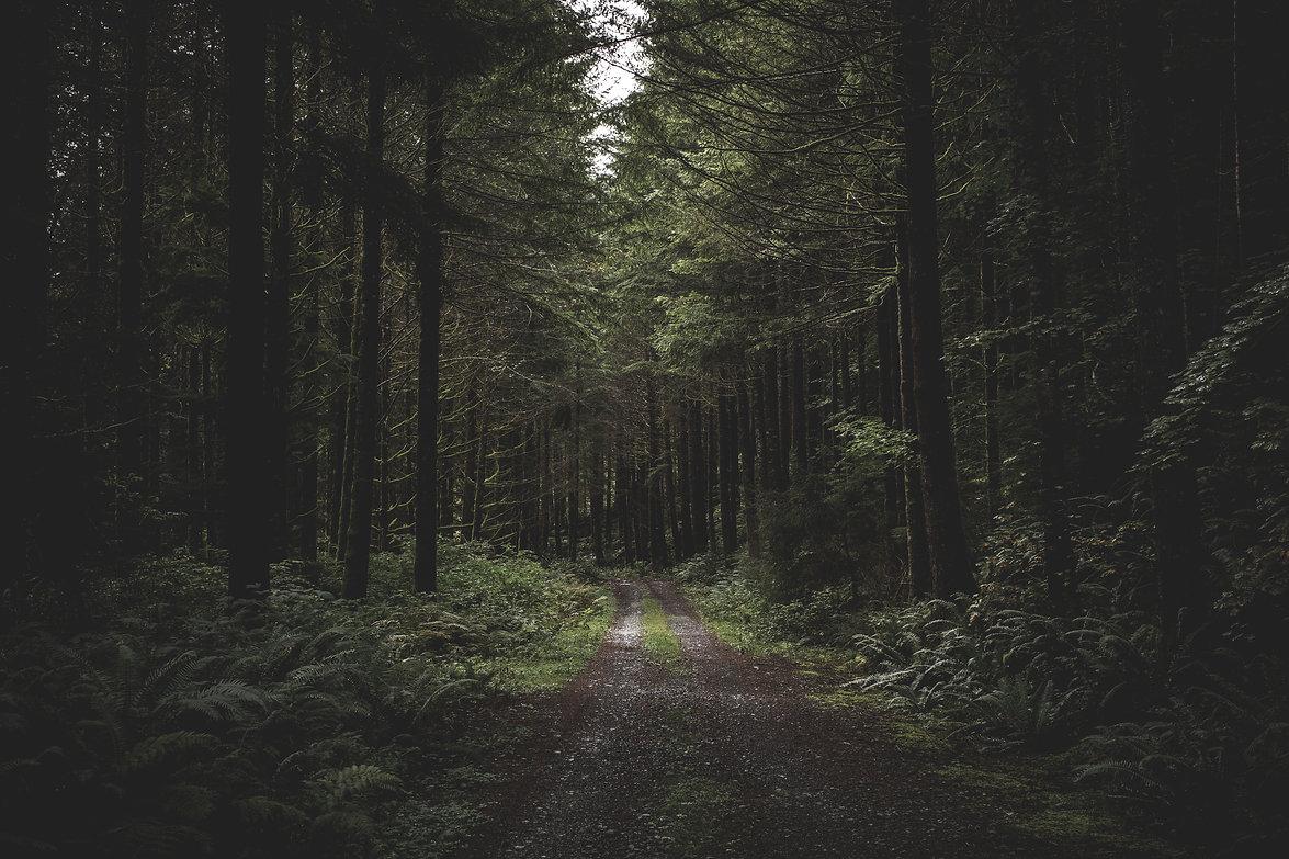 curvy-narrow-muddy-road-in-a-dark-forest