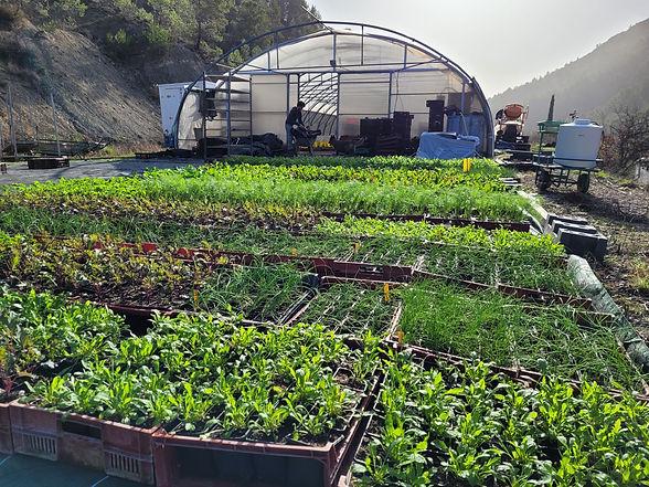 Le Fabuleux Jardin producteur légumes et aromates en biodynamie et permaculture