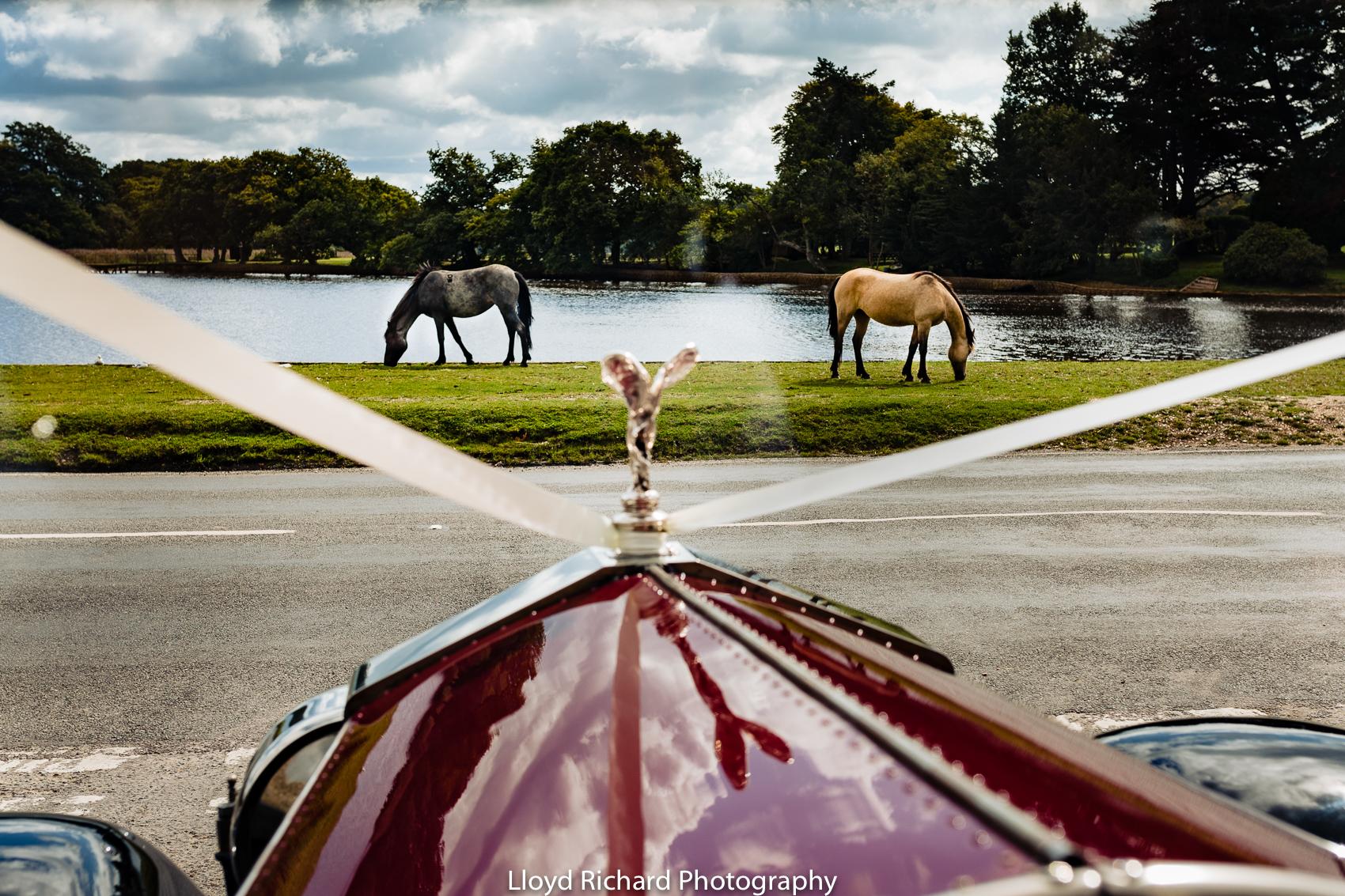 New forest horses at Beaulieu Abbey Domus wedding