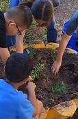 students planting milkweed