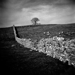 Wall leading to the tree