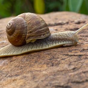 17.  course d'escargots