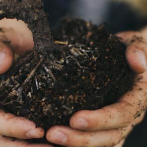 41. aider une plante à pousser