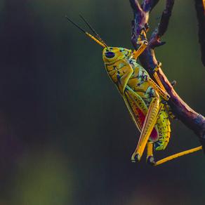 31. être ami avec un insecte