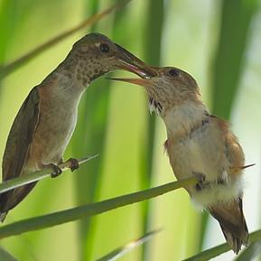 Etes-vous Parent-colibri ou Parent-hélicoptère