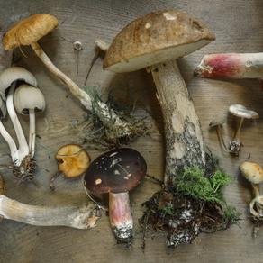 22. chercher des champignons