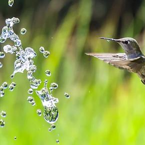 L'histoire du colibri...
